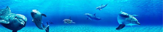 стеновая-панель-на-кухню-дельфины