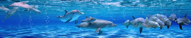 фартук-из-стекла-дельфины