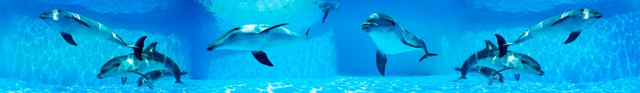 фото-для-фартука-дельфины