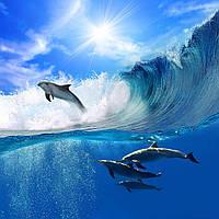 Дельфины - Образцы скинали - Лучшие фото из каталога для печати на стекле