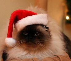 Новорічна шапка Діда Мороза для кішок