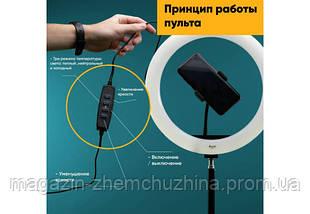 Кольцевая LED лампа LC-330 (1 крепл.тел.) USB (33см), фото 2