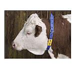 """Блок цифровой """"0"""" (48*59мм) к ошейнику для идентификации животных FARMA (Нидерланды), фото 2"""