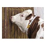 """Блок цифровой """"0"""" (48*59мм) к ошейнику для идентификации животных FARMA (Нидерланды), фото 3"""