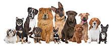 Home Food преміум для дорослих собак