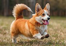 Home Food преміум для дорослих собак дрібних порід