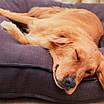 Лежак-коврик для домашних животных Hoopet HY-1881 размер M (5300-17713), фото 9