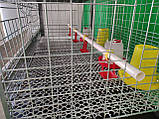 Клітка для утримання бройлерів двоповерхова. ВІДЕО, фото 3