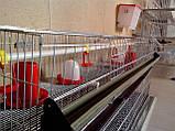 Клітка для утримання бройлерів двоповерхова. ВІДЕО, фото 6