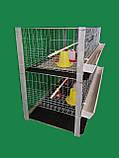 Клітка для утримання бройлерів двоповерхова. ВІДЕО, фото 8