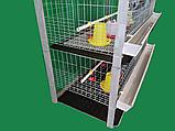 Клітка для утримання бройлерів двоповерхова. ВІДЕО, фото 9