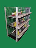 Клетка для 240 бройлеров, фото 2