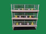 Клетка для 240 бройлеров, фото 3