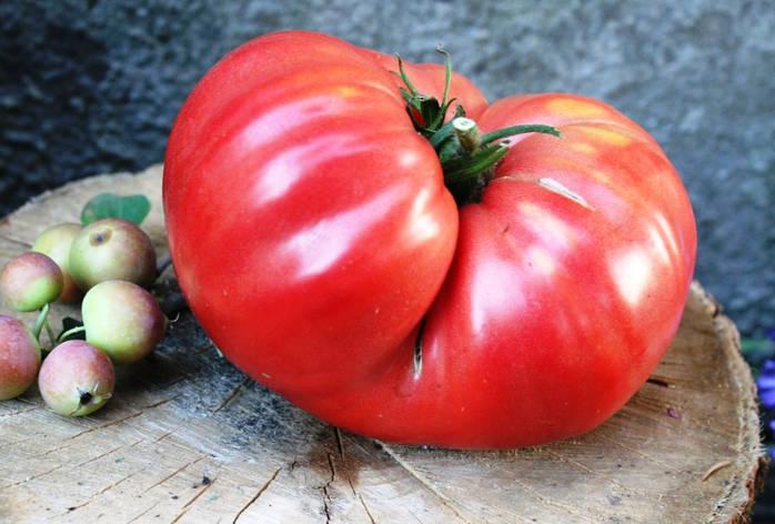 Семена томатов Миллионер розовый, фото 2