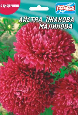 Астра Ежиковидная малиновая 100 шт., фото 2