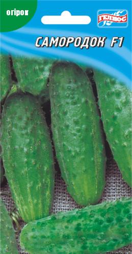 Семена огурцов пчелоопыляемых Самородок F1 20 шт.