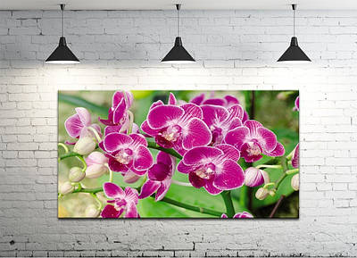 Картина на холсте DK Store (S50100-c1364)