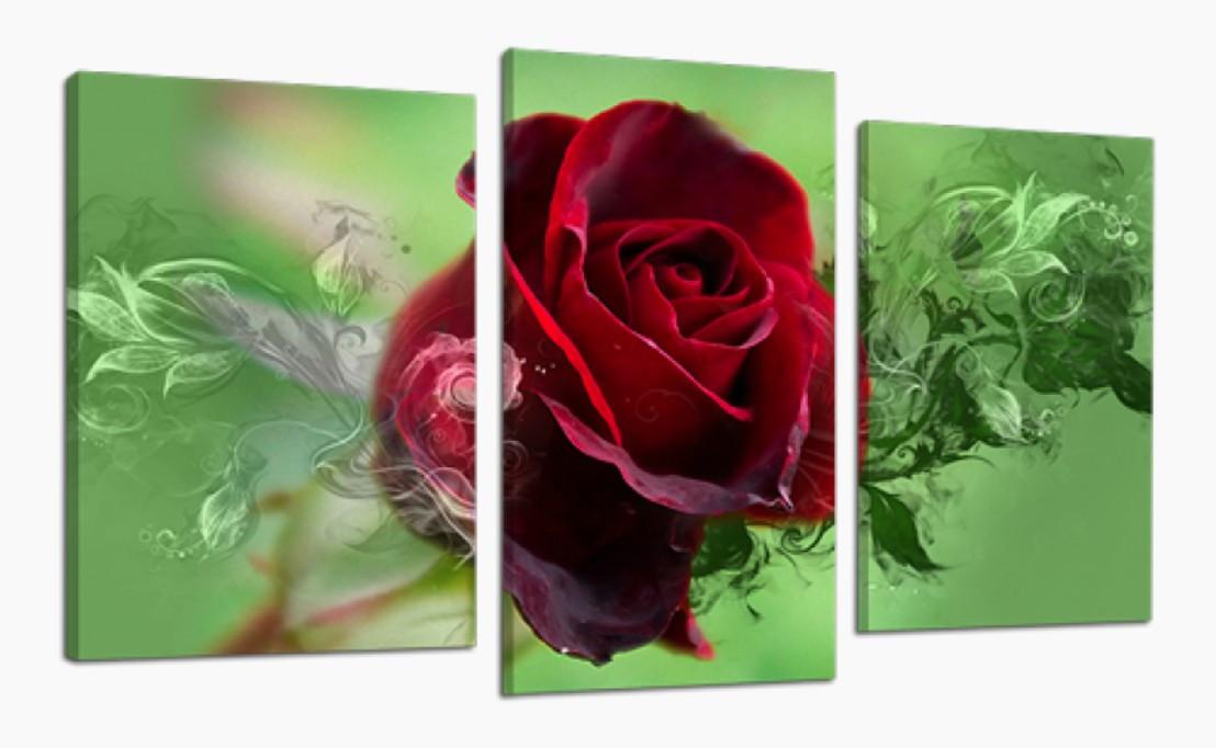 Модульна картина DK Store Ніжна Троянда 70x110 см (511_3)