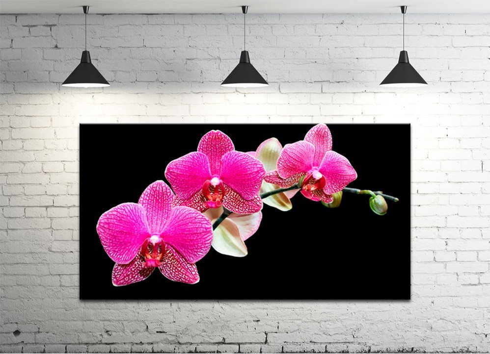 Картина на холсте DK Store (S50100-c5)