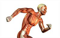 Применение нейрофизиологических методик исследования биомеханики нейро-моторного аппарата спортсменов в тренировочном процессе