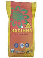 Семена подсолнечника НСХ 498 Стандарт под Гранстар