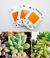 Комплект Линза и Светодиодная фито матрица  для растений  LED COB 50вт 230в Full Spectrum, фото 3