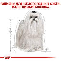 Корм ROYAL CANIN MALTESE ADULT 500 gr для взрослых собак породы МАЛЬТИЙСКАЯ БОЛОНКА