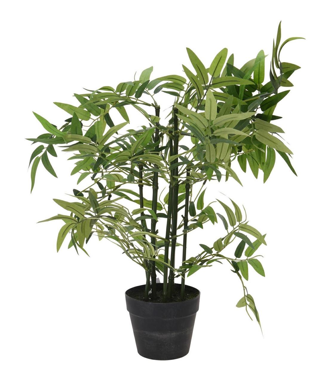 Бамбук в горшке Intesi 60 см