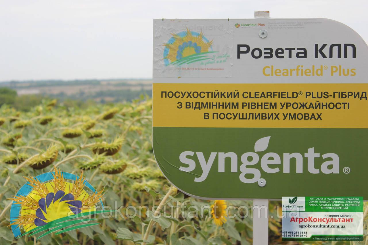 СІ Розета КЛП - насіння соняшнику 2020р. (Clearfield Plus, екстенсивний, A-F). Syngenta