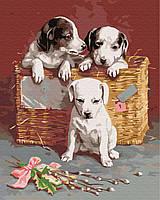 Картина рисование по номерам Brushme Щенки в корзине BRM8384 40х50 см Коты и собаки набор для росписи краски,, фото 1