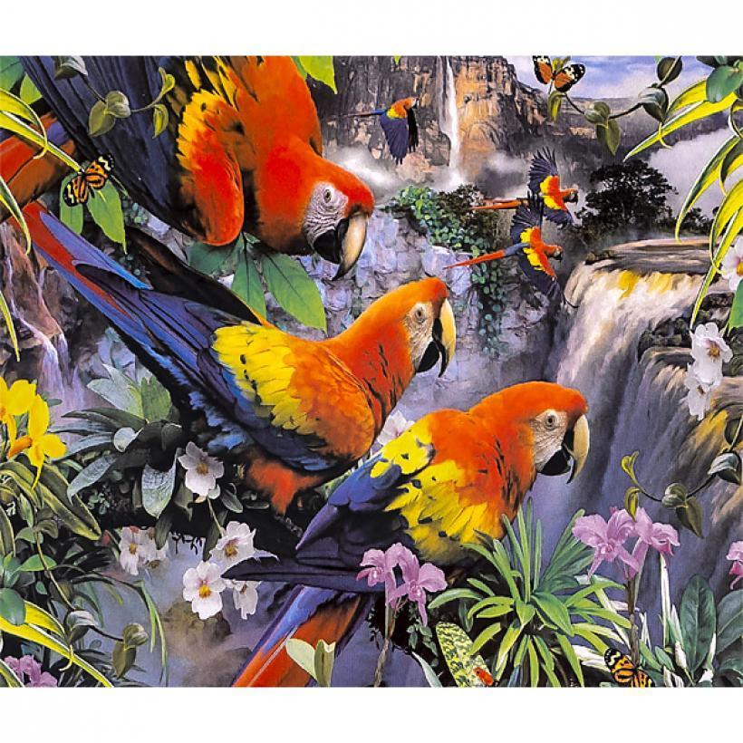 Картина по номерам 40x50 30400 DIY Попугаи, в подарочной упаковке