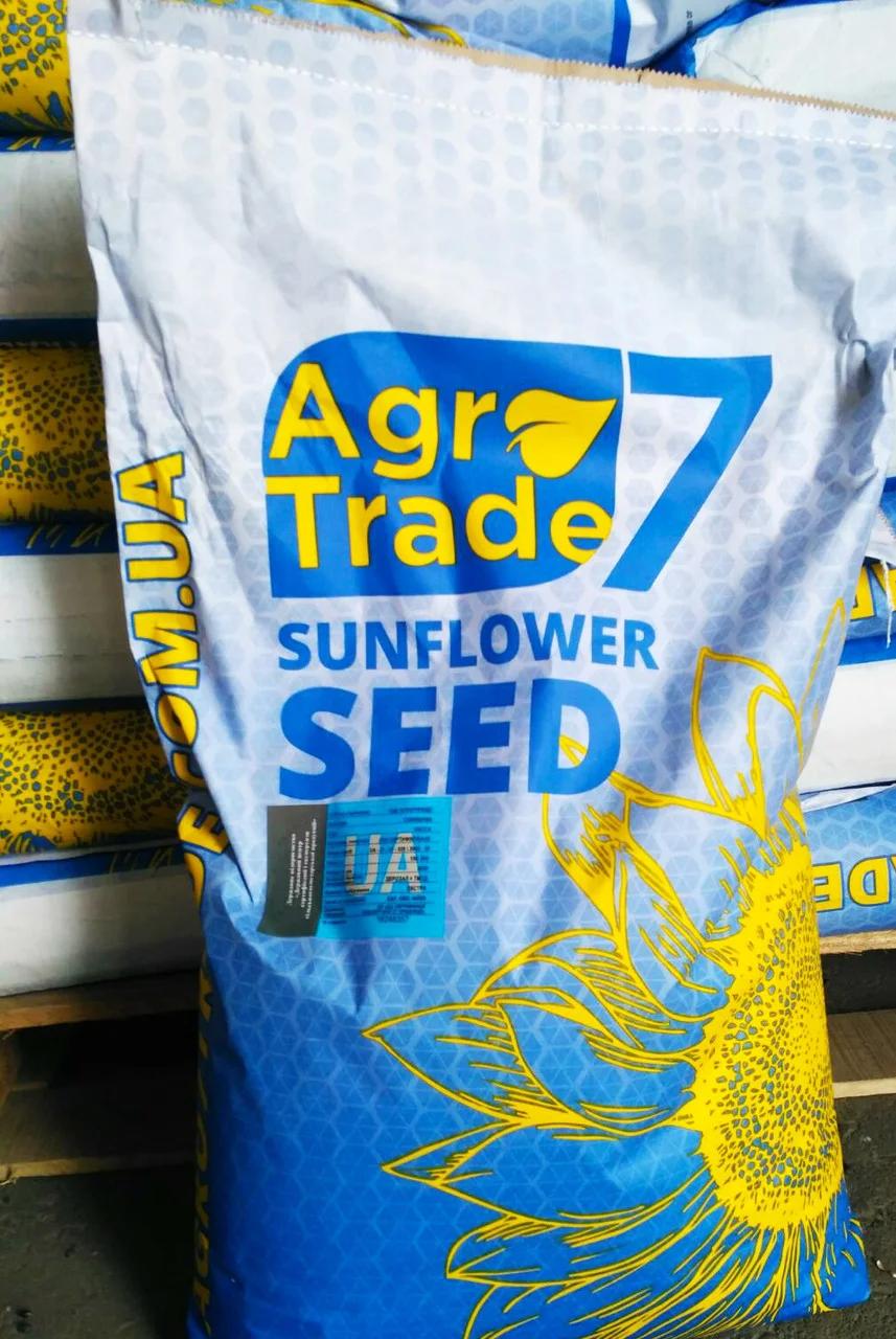 Семена подсолнечника Ласса (аналог Неома) под Евро-Лайтнинг 2020