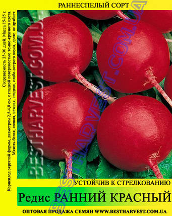 Семена редиса Ранний Красный 1 кг, фото 2
