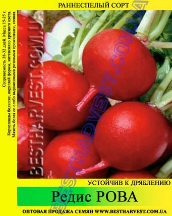 Семена редиса Рова 1 кг, фото 2