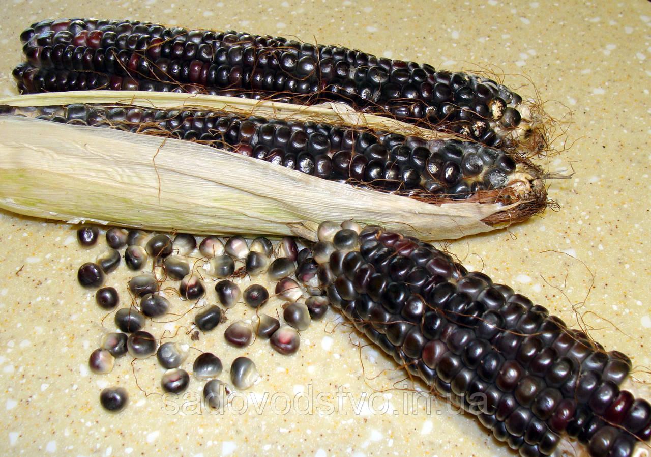 Кукуруза Ацтеков