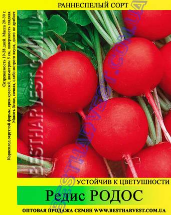 Семена редиса Родос 1 кг, фото 2