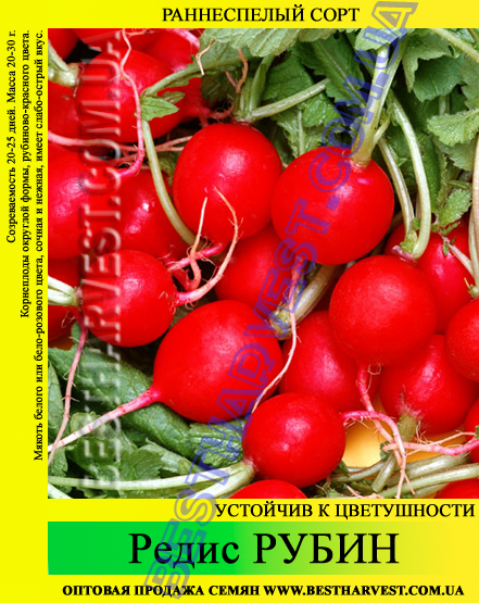 Семена редиса Рубин 1 кг