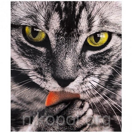 """Картина по номерам """"Мордочка кота"""" на полотне, большая 400*500мм №30665"""