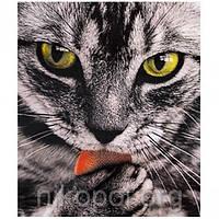 """Картина по номерам """"Мордочка кота"""" на полотне, большая 400*500мм №30665, фото 1"""