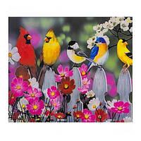 "Картина раскраска по номерам ""Птицы на заборе"", 40х50см. №30351"