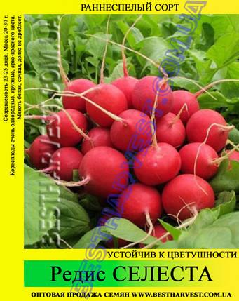 Семена редиса Селеста 1 кг, фото 2
