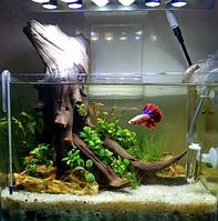Який акваріум краще вибрати для початківців акваріумістів