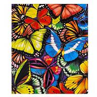 """Картина раскраска по номерам """"Пёстрые бабочки"""", 40х50см. №30440"""