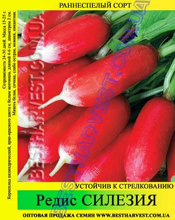 Семена редиса Силезия 1 кг, фото 2