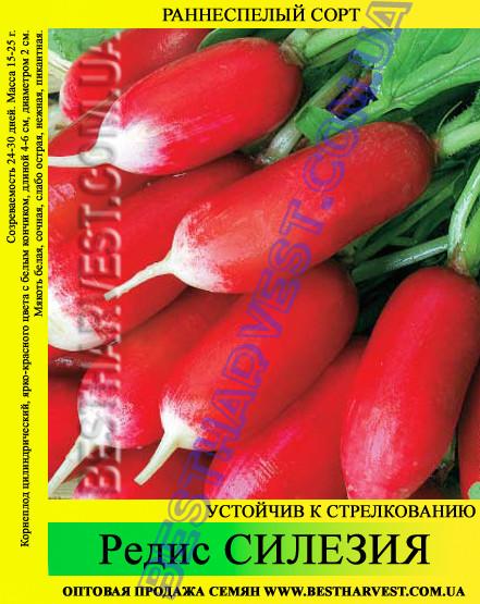 Семена редиса «Силезия» 25 кг (мешок)