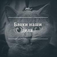 Блохи: як вивести їх у кота або собаки