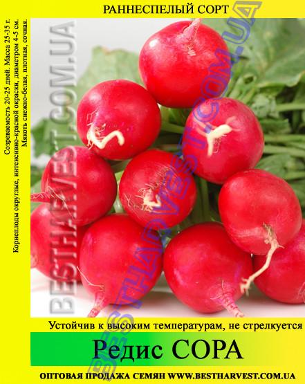 Семена редиса «Сора» 25 кг (мешок)