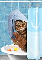 Как купать кошку в домашних условиях