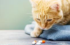 Препарати для котів