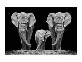 Картина на склі Signal Сім'я слонів ELEPHANTFAM120